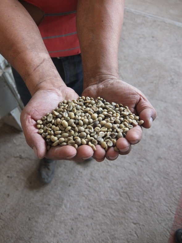 Indigenous growers of coffee rely on traditional drying methods to produce superior beans.