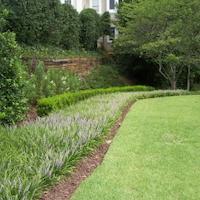 Liriope & Lawn