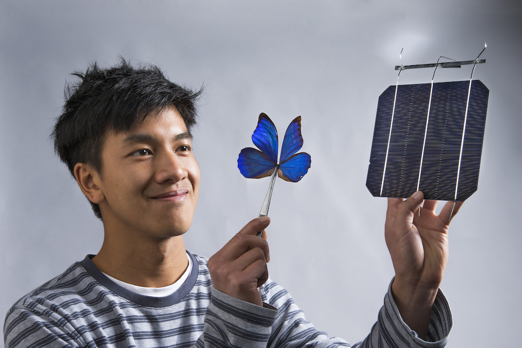 Co-researcher Kevin Le from ANU with a blue Morpho butterfly and a solar cell. Image: Stuart Hay, ANU.