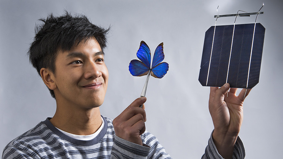 Butterfly wings inspire invention that opens door to new solar technologies