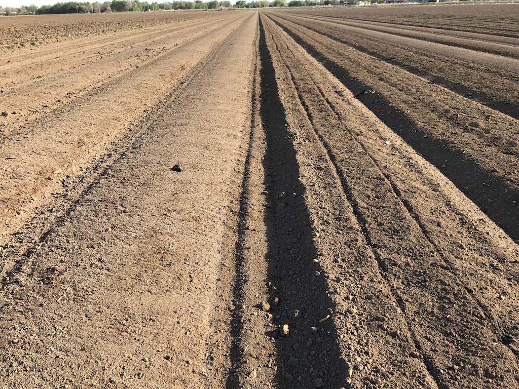 The finish-tilled bed is on the right; the shaped bed ready for planting is on the left