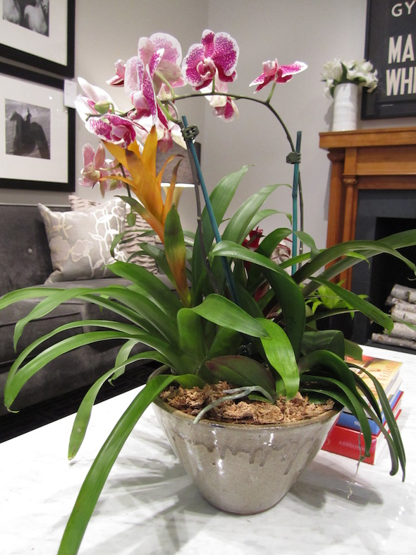 Houseplant Container with Orchid - Bromeliad