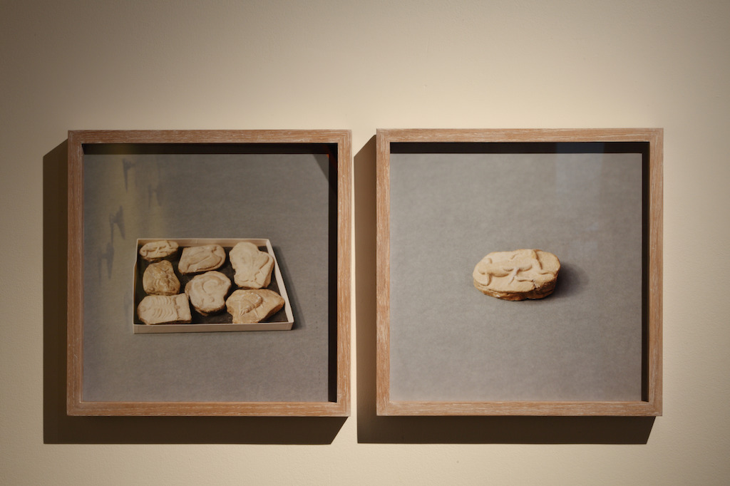 Untitled (Beringer's Lying Stones), 2014-2015, © Natural History Museum, Londen. Courtesy the artist; Sfeir-Semler Gallery, Hamburg/Beirut<br/>Photo (c) Dirk Pauwels