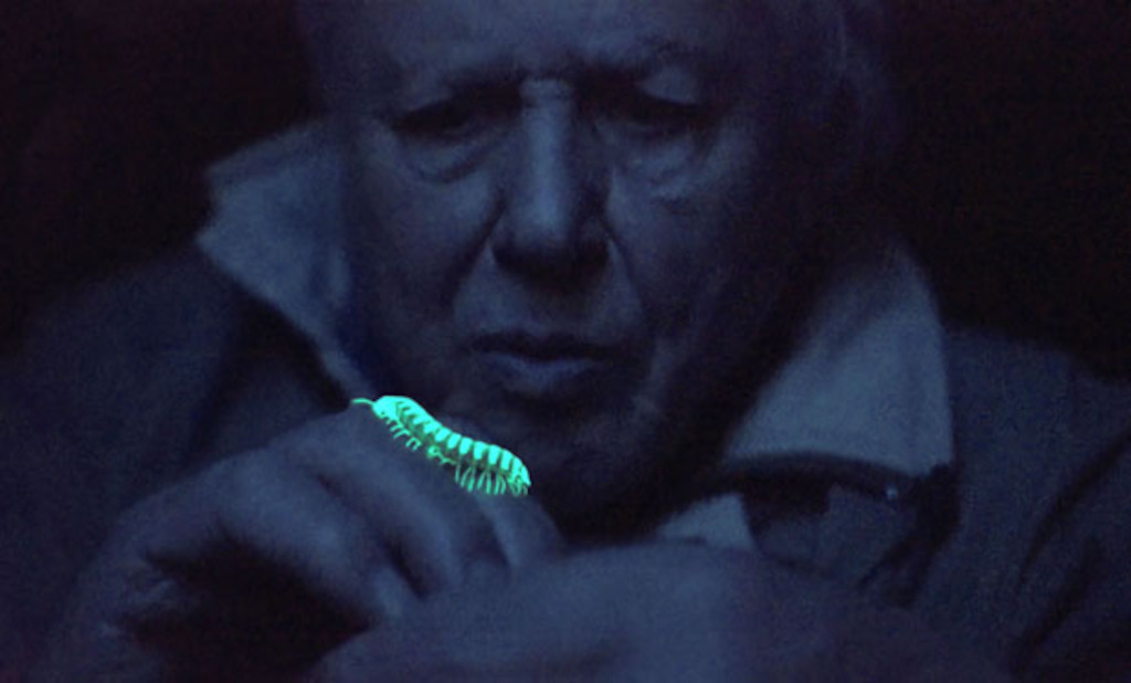 David Attenborough's Light on Earth - (c) Terra mater / Redbull Media