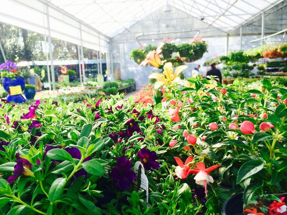 Pike Nurseries opens new Matthews location today!